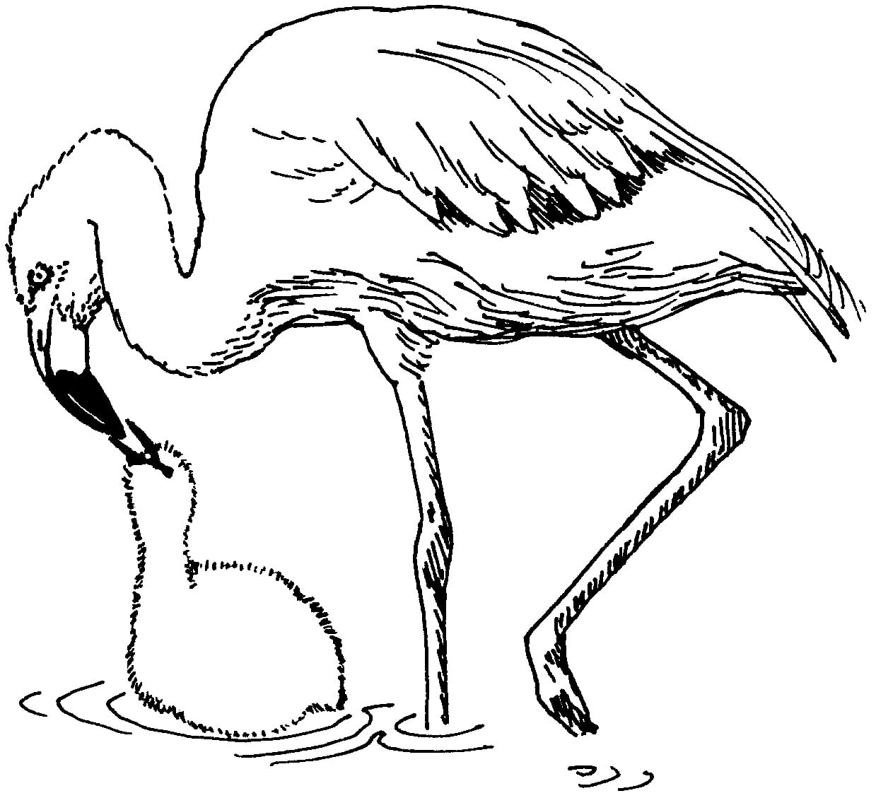 Best Images Of Cute Flamingo Coloring Page Baby Flamingo Coloring