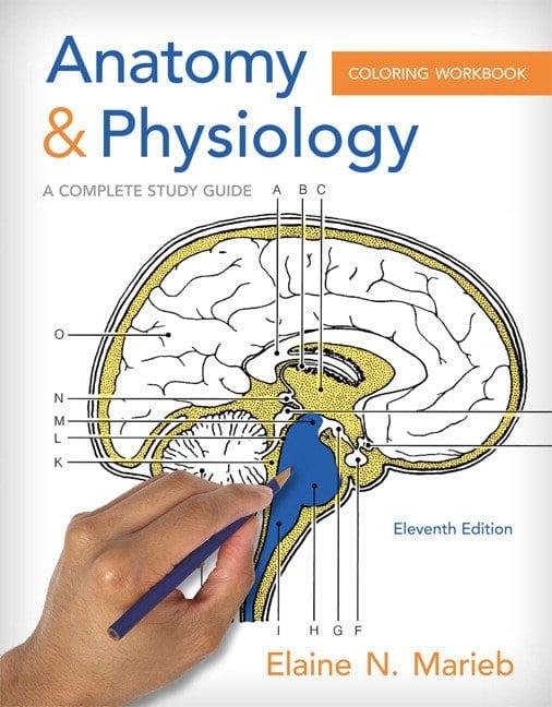 Marieb Anatomy Physiol Considerable Human Anatomy And Physiology