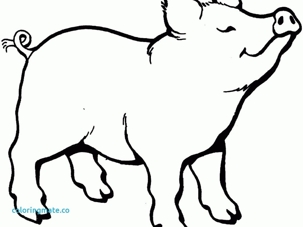 Pig Coloring Pages Best Of And Piglets Page Free – NEO Coloring