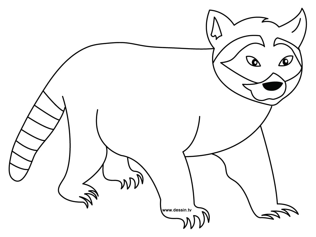 Raccoon Within Coloring Page