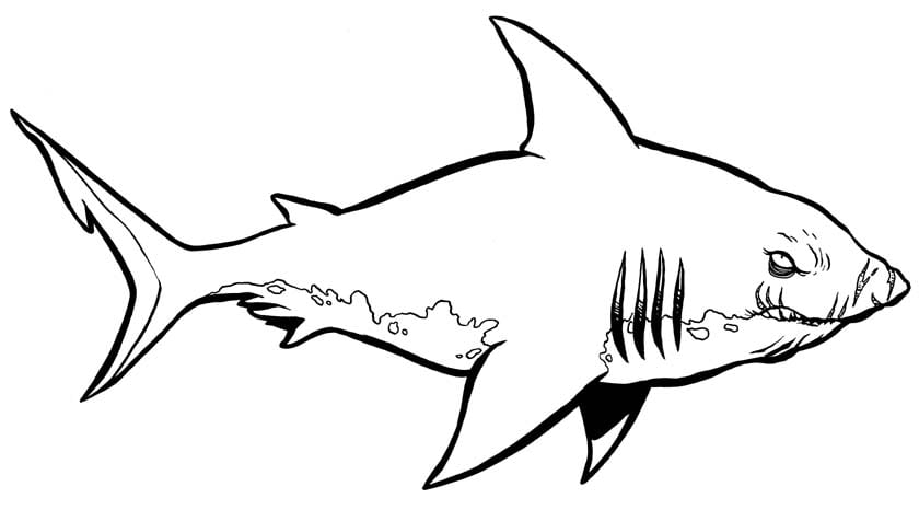 Sharks Coloring Pages 13  11840