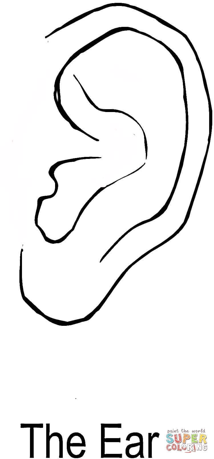 The Ear Coloring Page