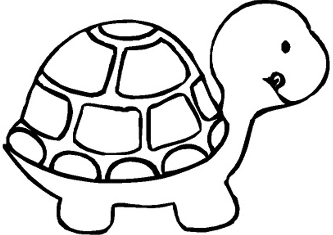 Turtle Preschool Coloring Pages Zoo Animals Animal Colori On Bird