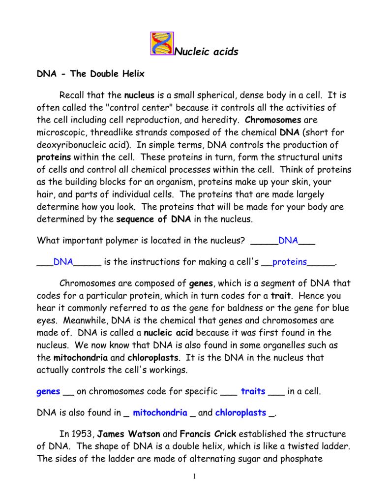 Worksheets Dna The Double Helix Worksheet dna the double helix worksheet answer worksheets kristawiltbank kristawiltbank