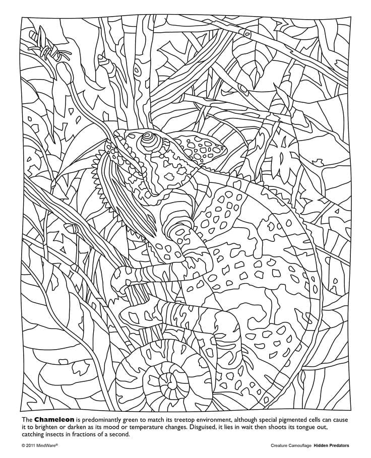 276 Best Color  Mandalas And Zentangles & Patterns Images On