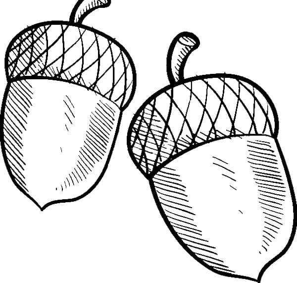 Acorn Coloring Pages 10  2368
