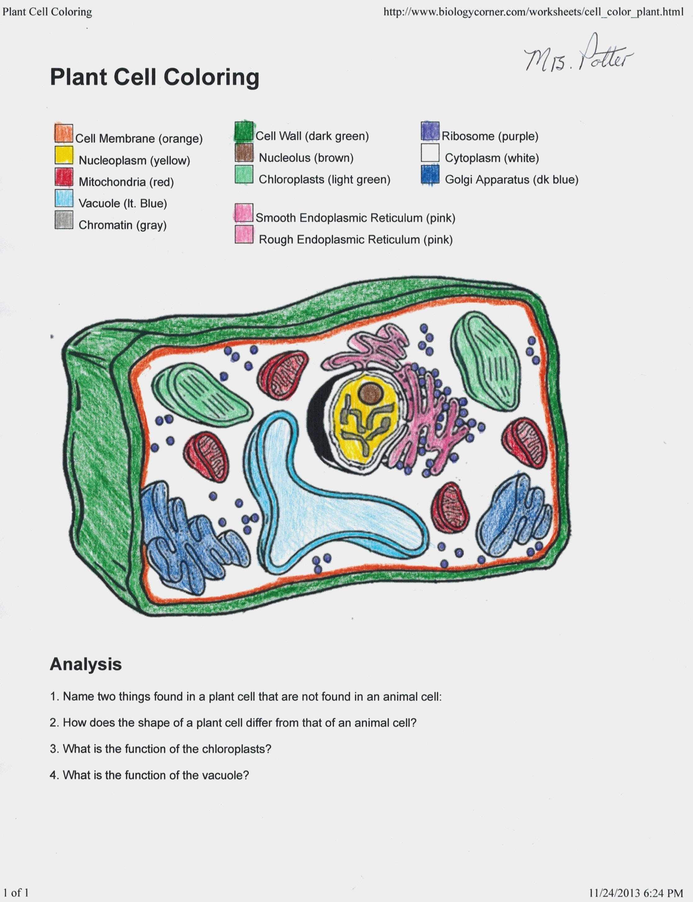 Animal Plant Cell Coloring Worksheet Key