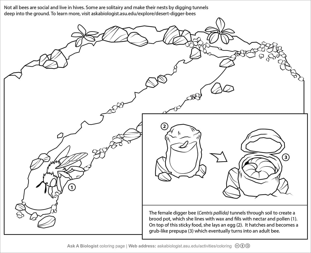 32 Best Of Ask A Biologist Coloring Page