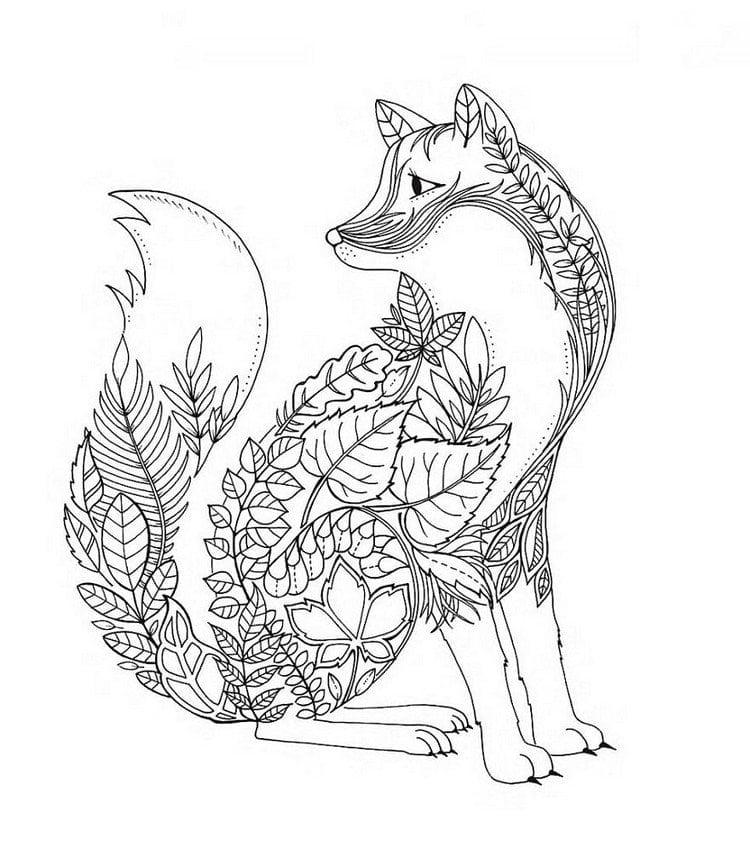 Fox Coloring Book
