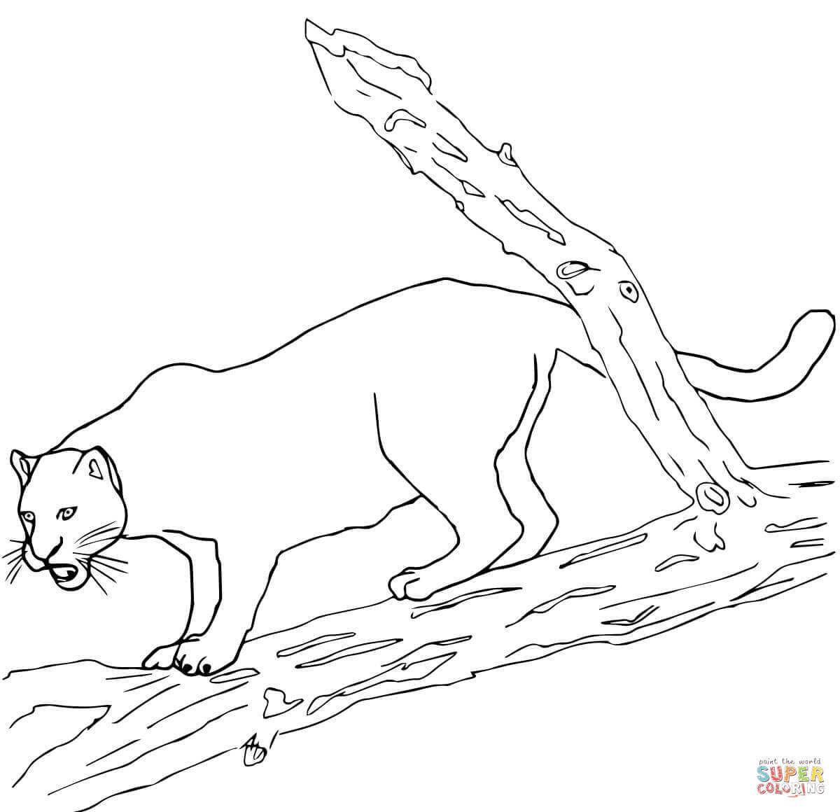 Jaguars Coloring Pages