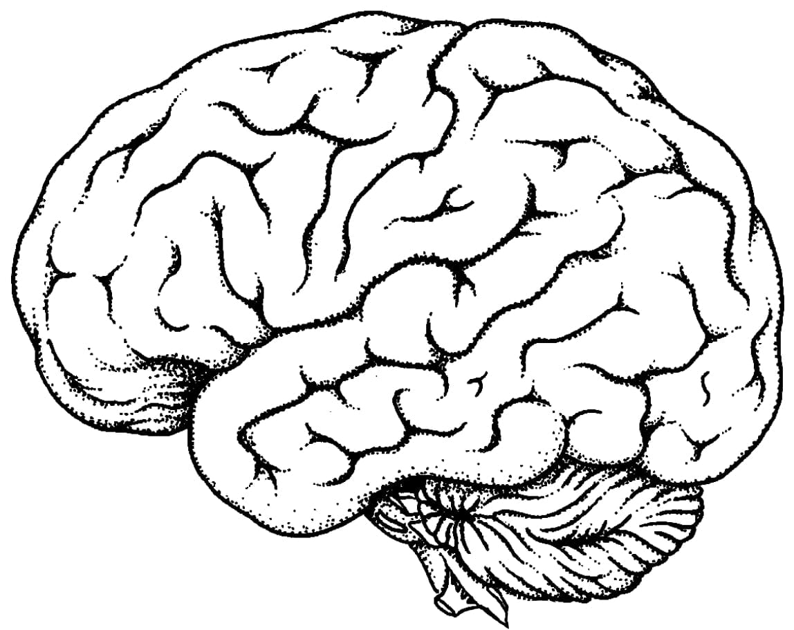 Brain Coloring Page Coloring Pages Brain Coloring Page Cute