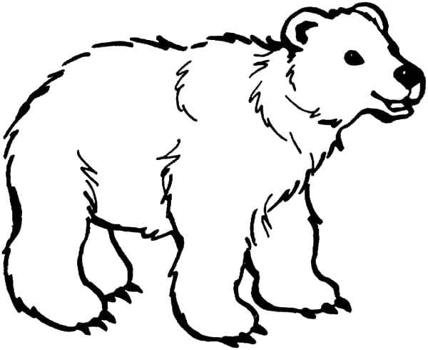 Brown Bear Coloring Pages 12  33253