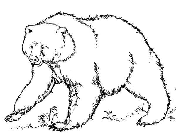 Brown Bear Coloring Pages 4  33245