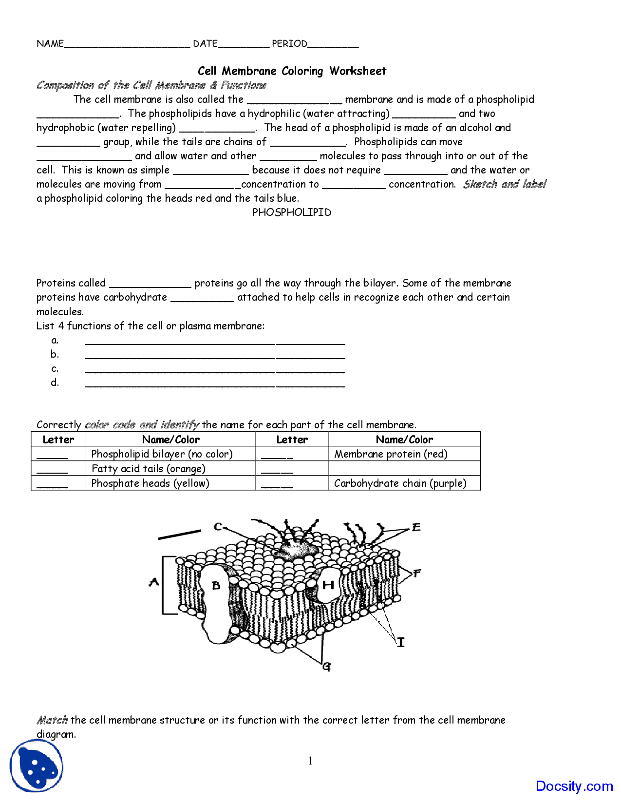 Cell Membrane Coloring Worksheet Adults Answers Biology Junction