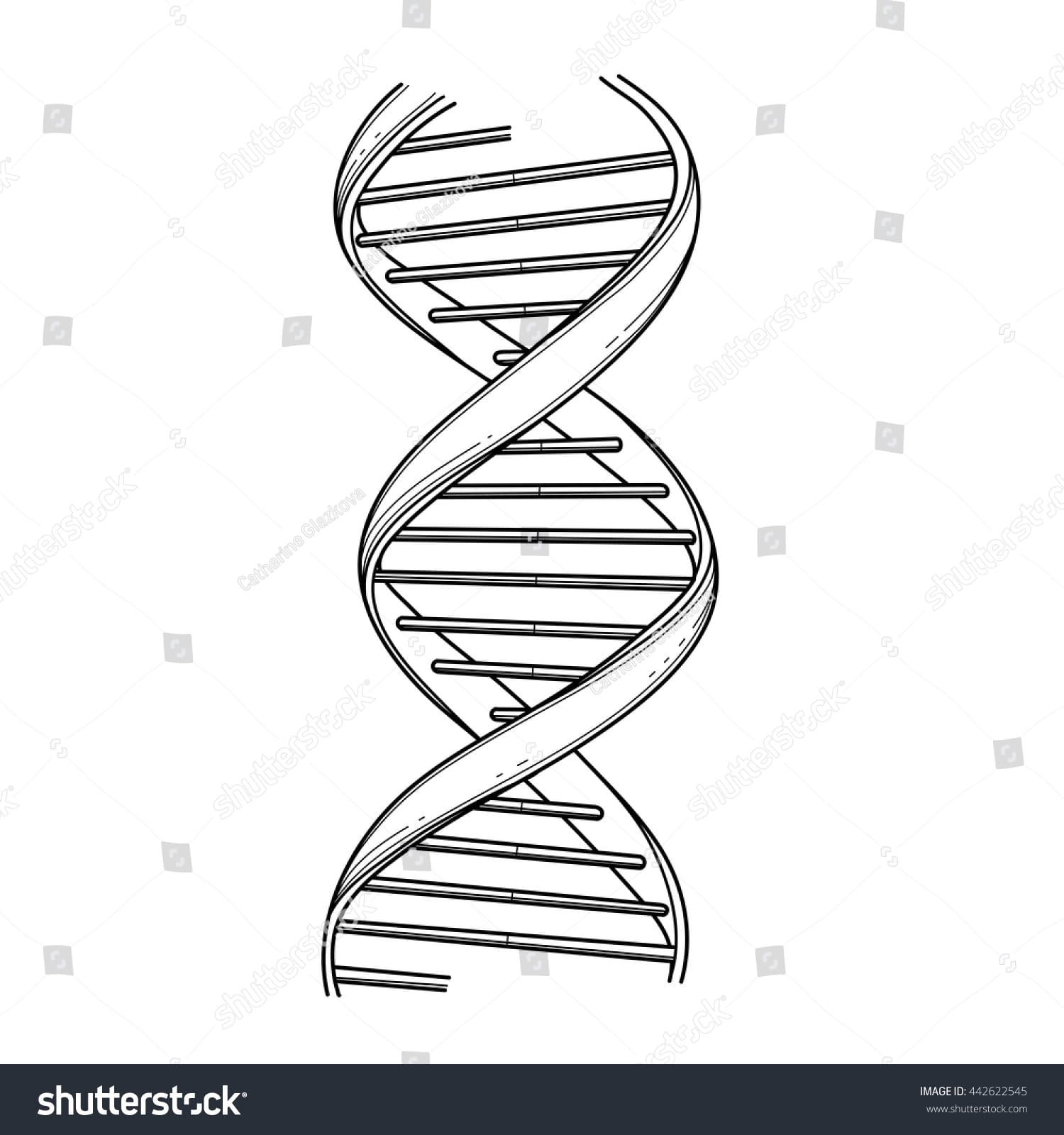 Common Worksheets Dna Replication Coloring Worksheet And Page At