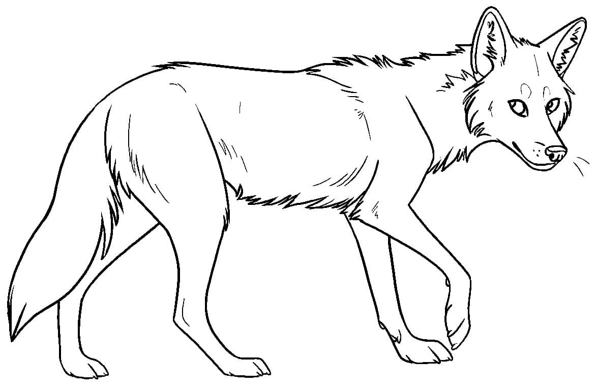 Coyote Coloring Page Pages Preschool To Amusing Kids At