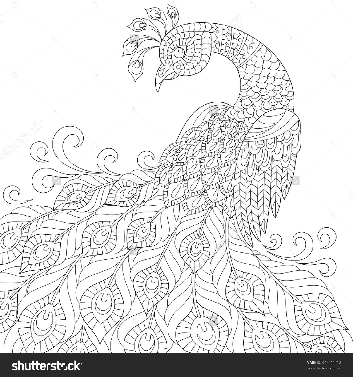 Peacock Coloring Pages For Adults Printable Best Of
