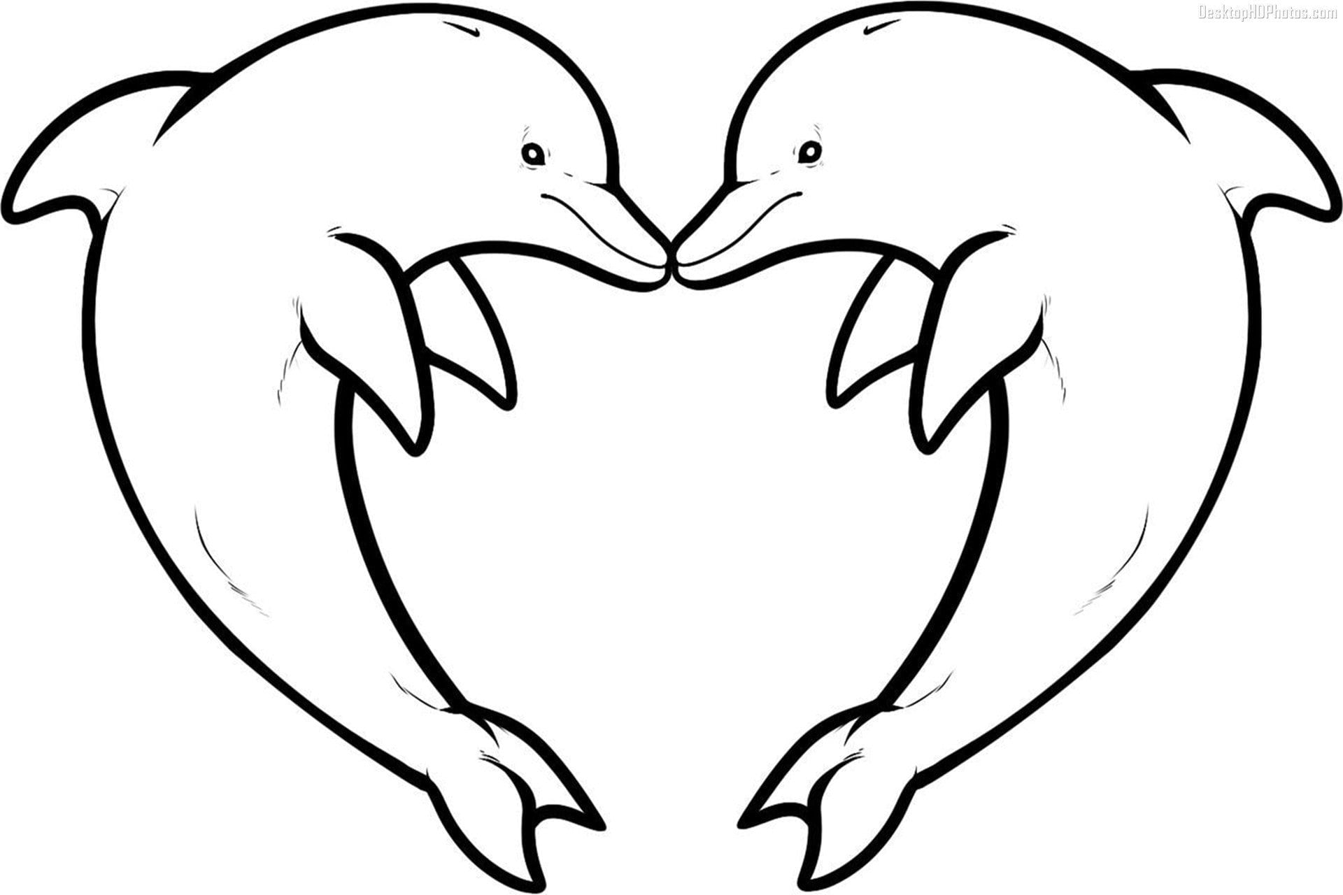 Coloring Book And Pages ~ Dolphin Coloring Pages Popular Coollery