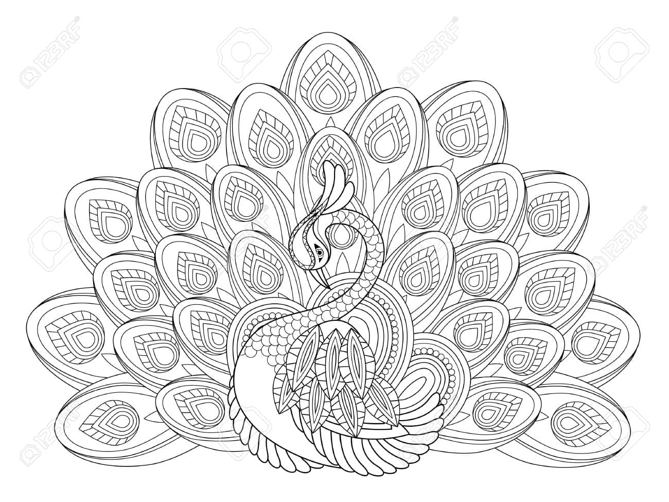 Emerging Peacock Coloring Sheet Pages For Adul  13883