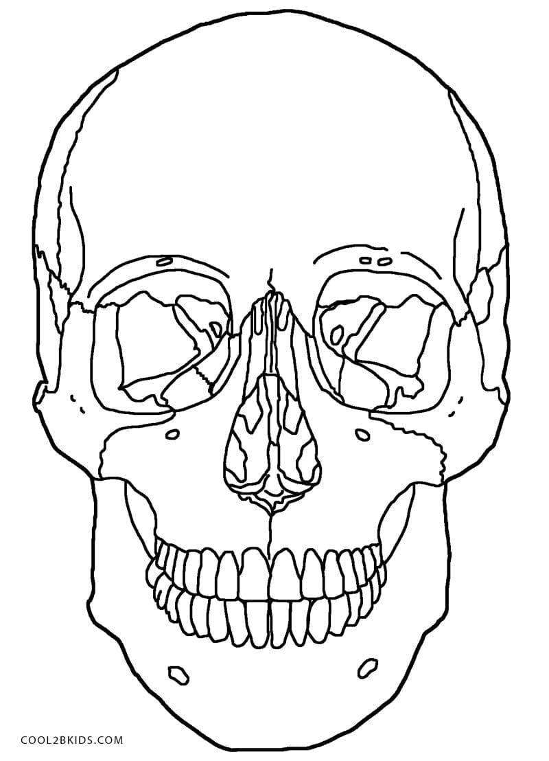 Excellent Anatomy Skull Coloring Pages From Skull Coloring Pages