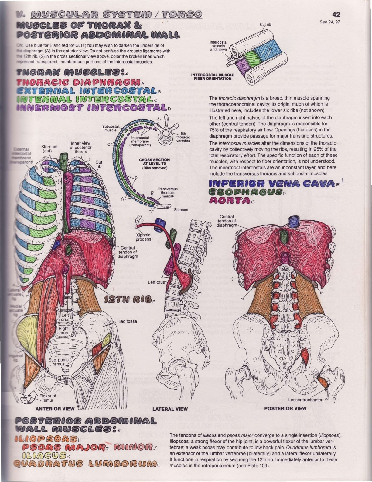 Fa The Anatomy Coloring Elegant The Anatomy Coloring Book