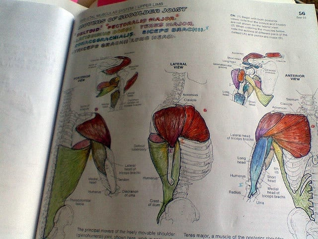 Luxury Best Anatomy Coloring Book