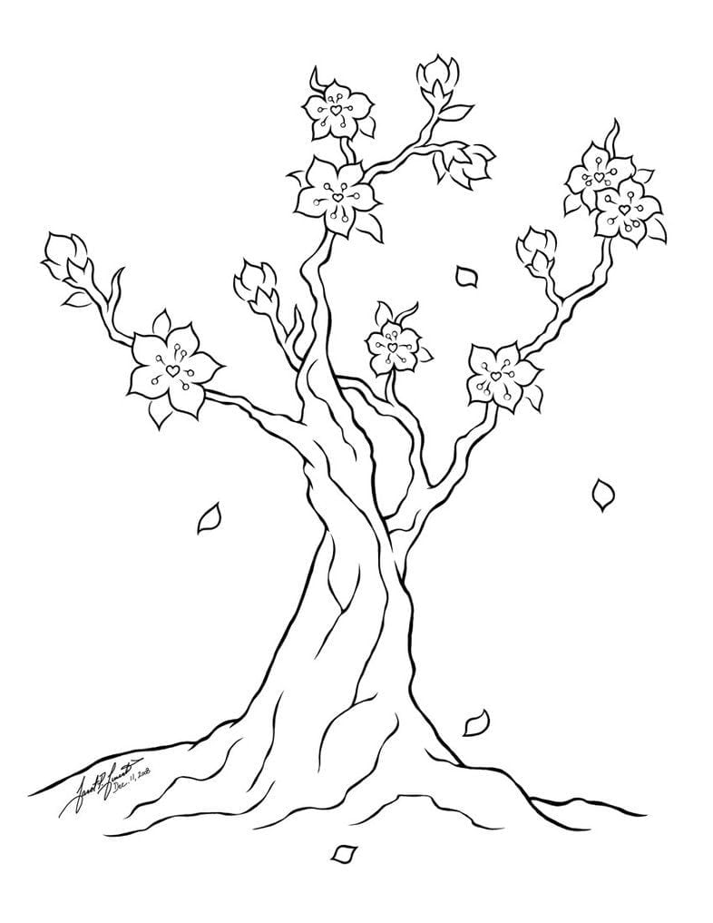 Focus Cherry Blossom Coloring Pages Page And R  14270