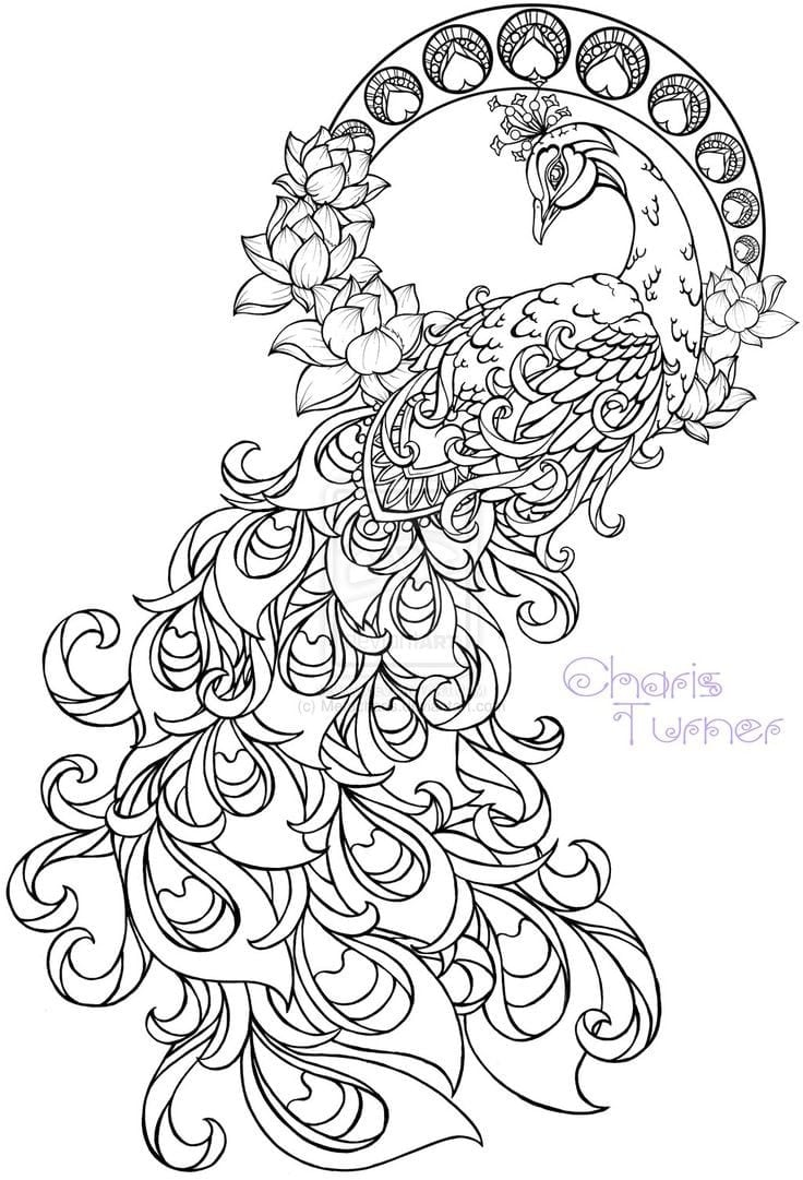Free Coloring Pages For Adults Animals Fresh Adult With Peacock