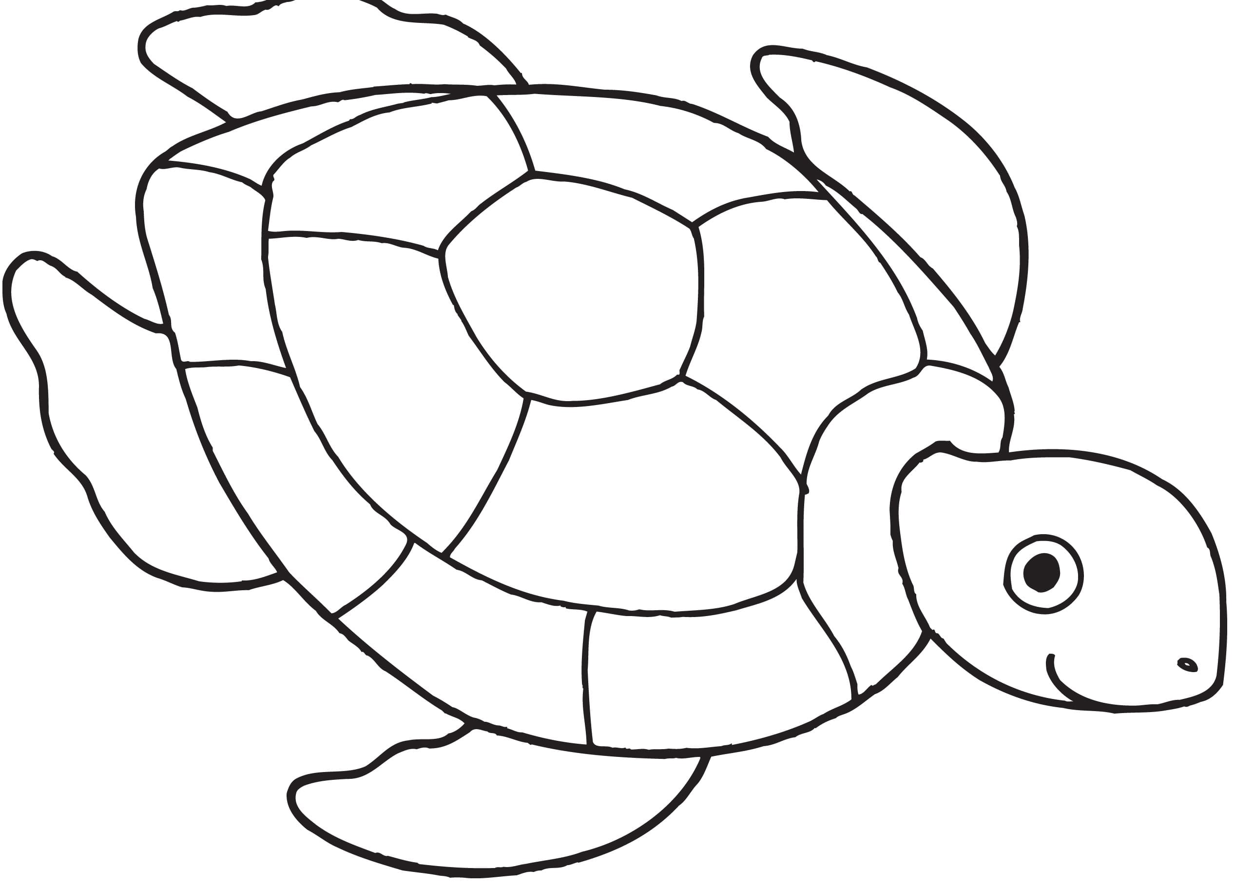 Turtles Coloring Pages Free For