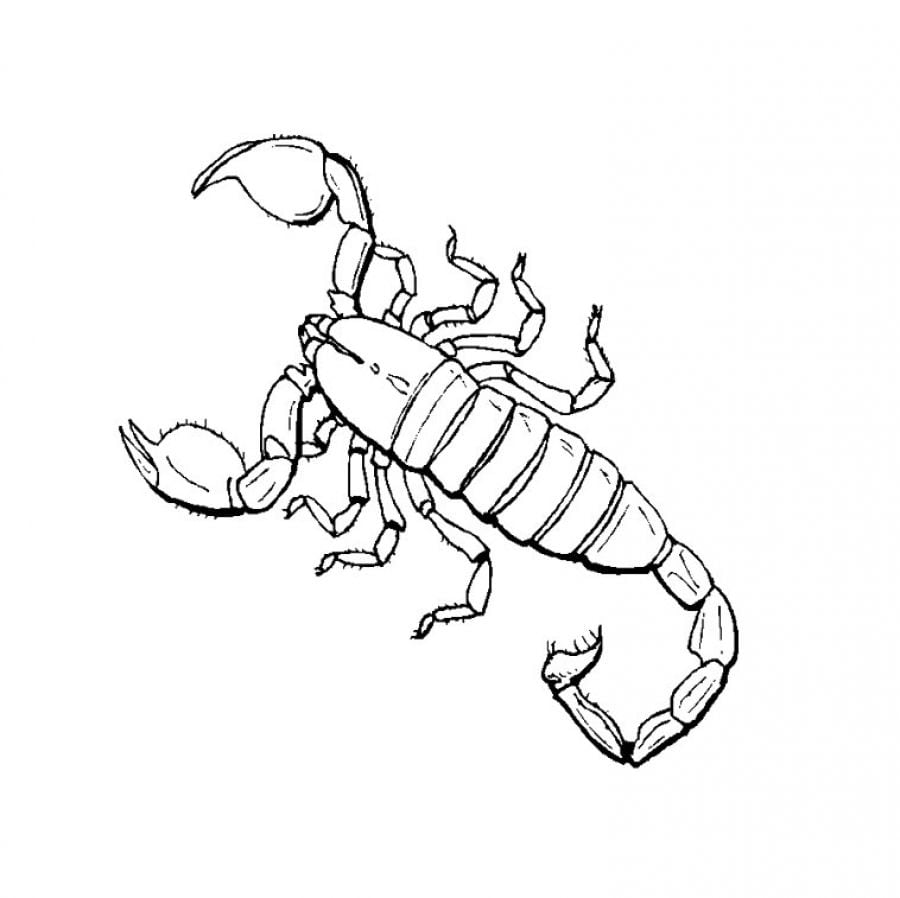 Fresh Scorpion Coloring Pages To Download And Print For Free On