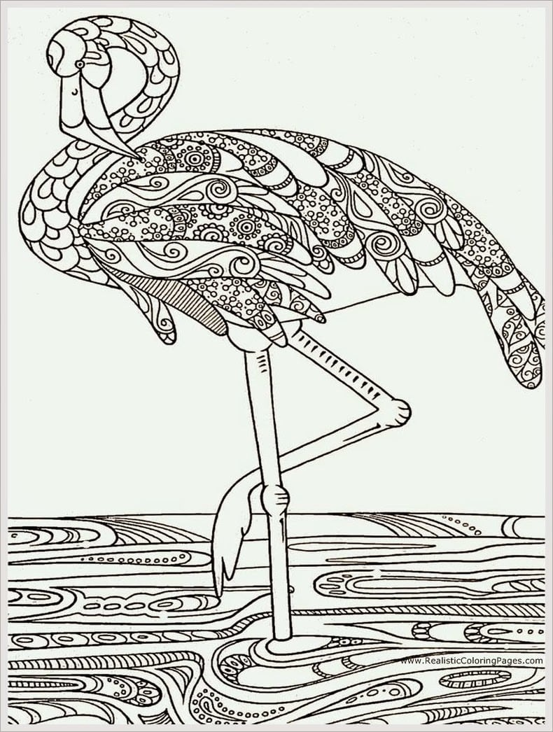 Heron Bird Adult Coloring Pages Free Realistic At