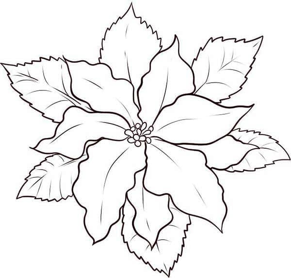Poinsettia Coloring Page Twisty Noodle Printable Poinsettia