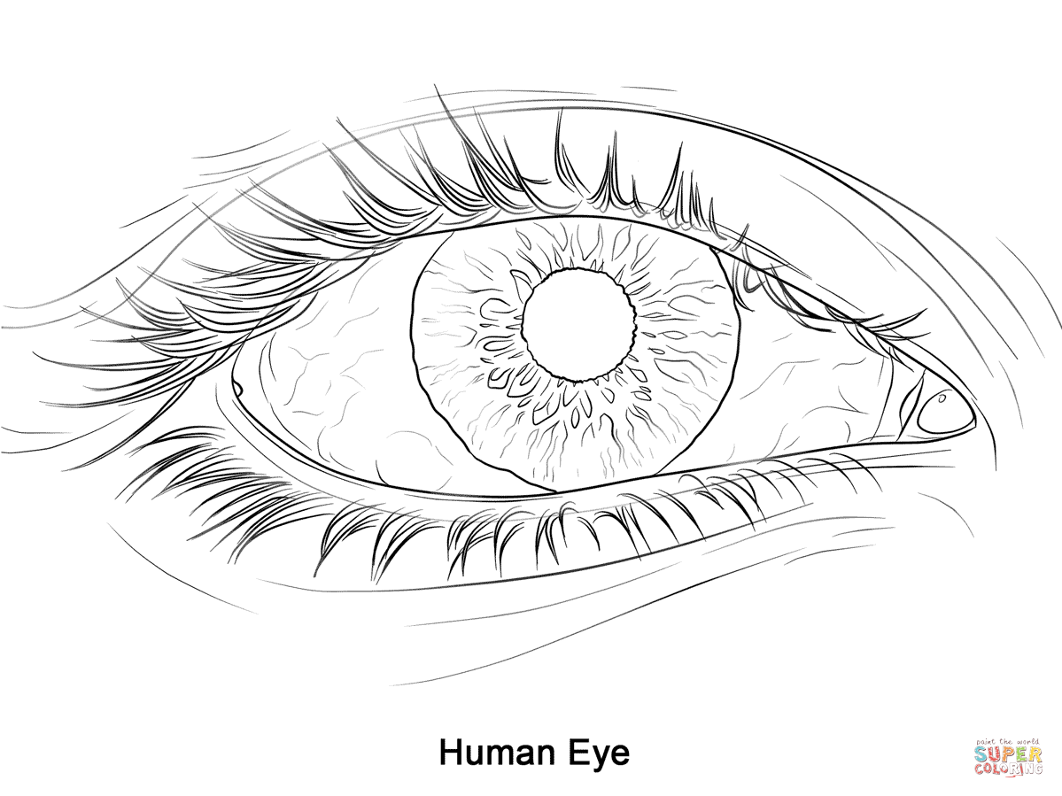 Human Eye Coloring Page Free Printable Coloring Pages Eye Coloring