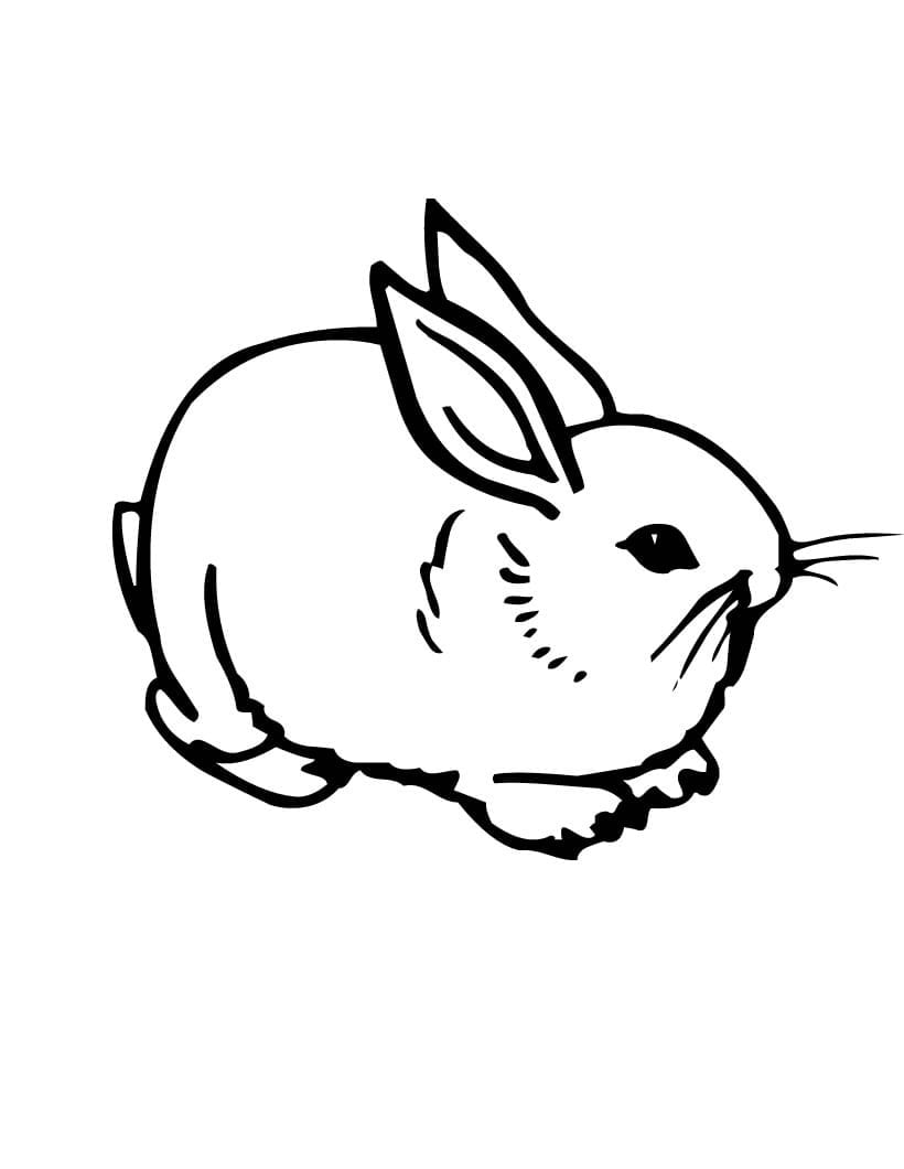 Impressive Realistic Bunny Coloring Pages Of A  15907