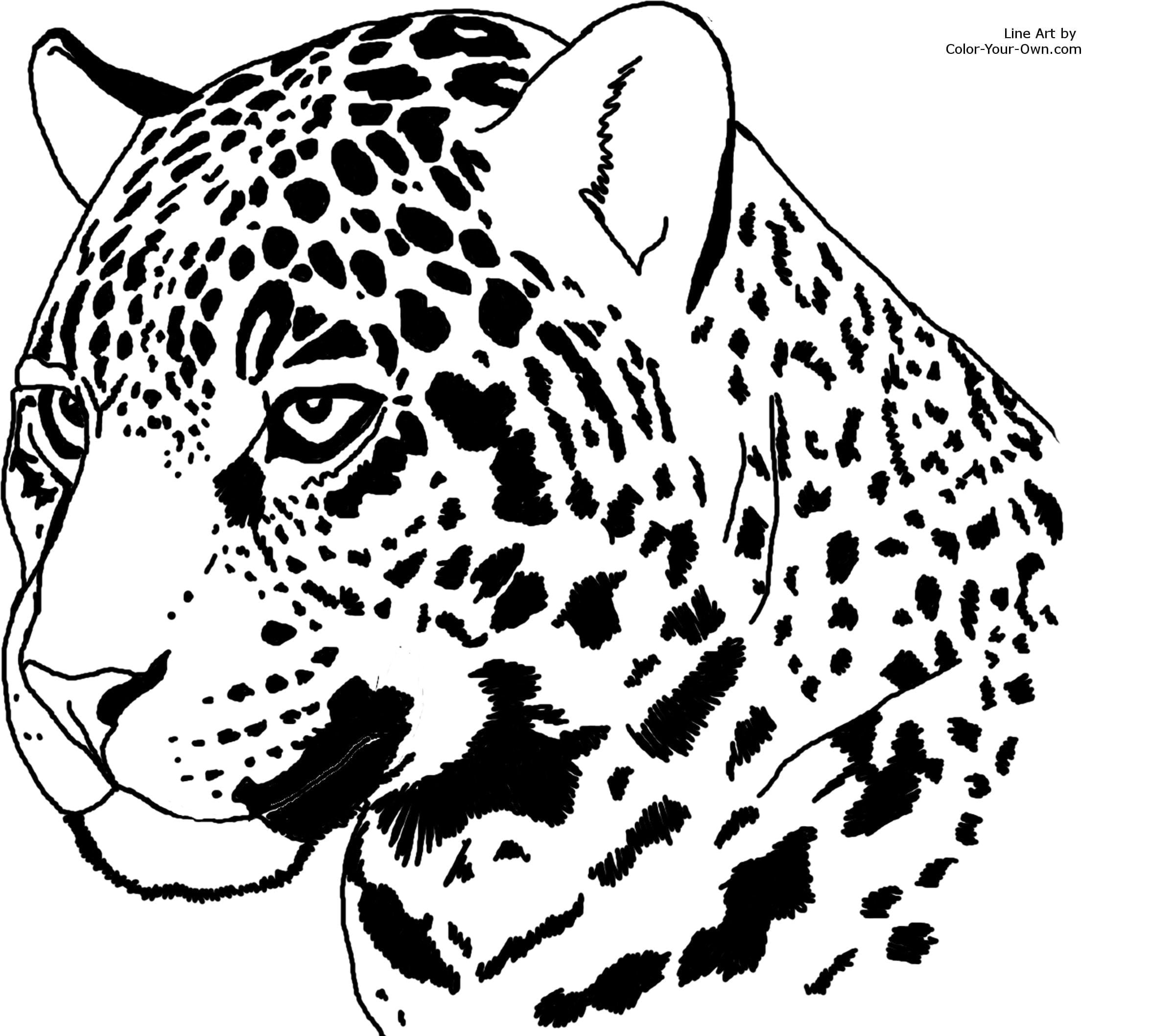 Jaguar Coloring Pages With Fantastic Go Printable In