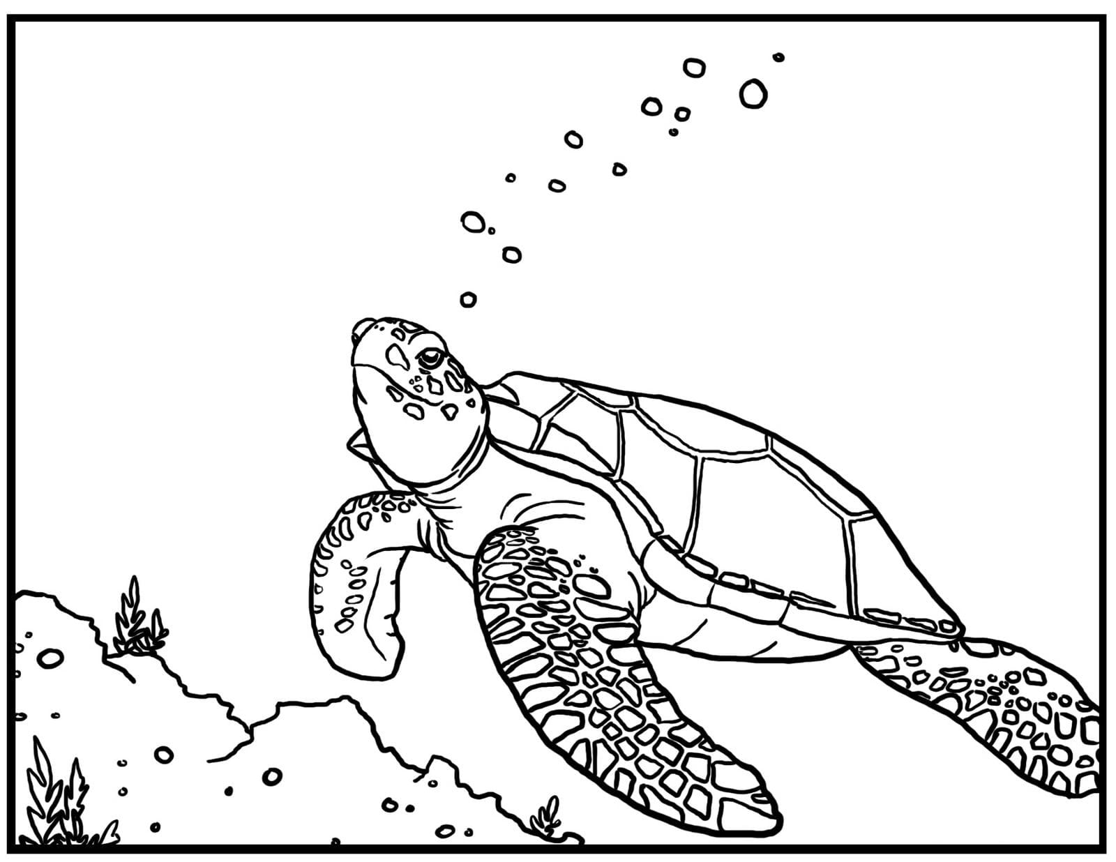 Liberal Sea Turtles Pictures To Color Printable Turtle Coloring