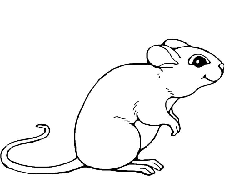 Mouse Coloring Page Mouse Coloring Sheet Markhollandco