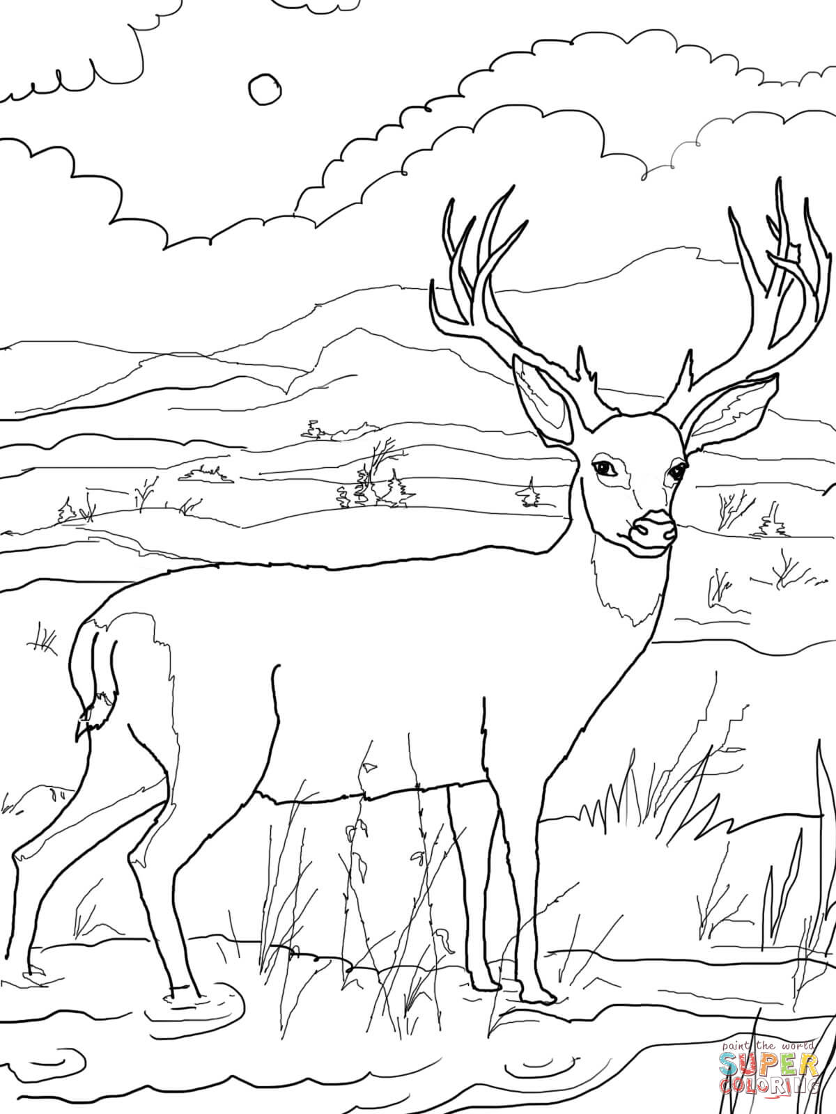 New Deer Coloring Sheet Mule Pages Free  11545