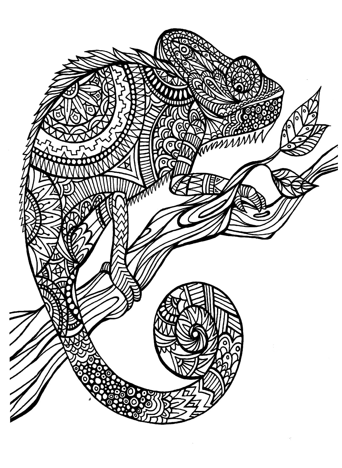 Peaceful Design Animal Coloring Pages For Adults Chameleon