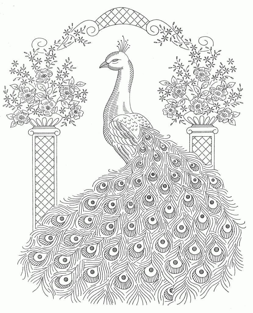 New Peacock Awesome Projects Peacock Coloring Pages For Adults At