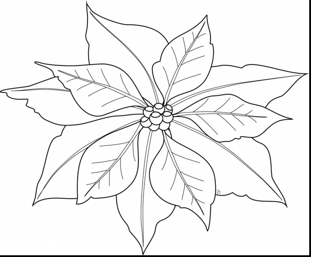 Poinsettia Coloring Pages  14773