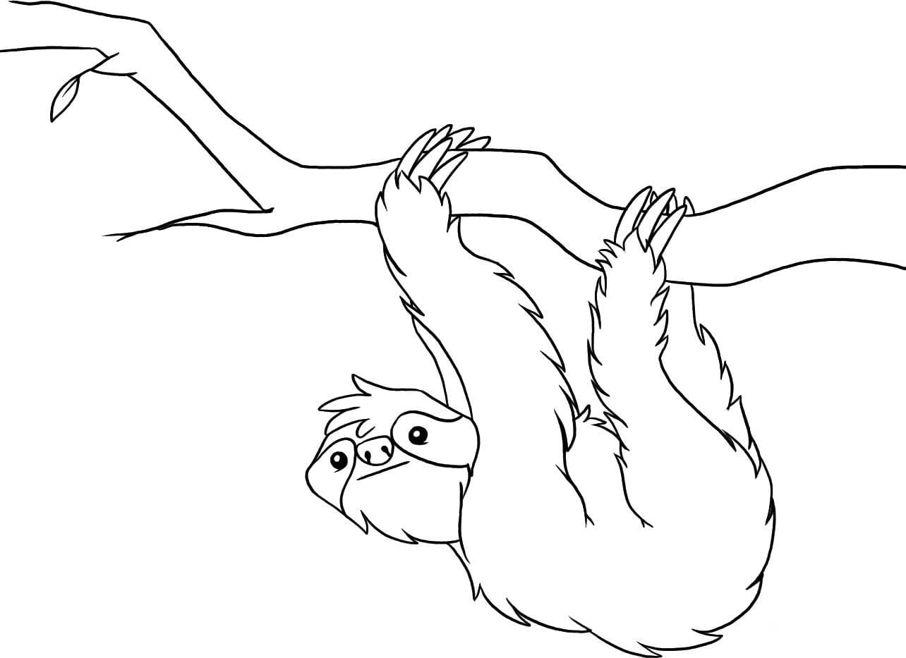 Printable Sloth Coloring Pages Kids Coloring Pages Sloth Coloring