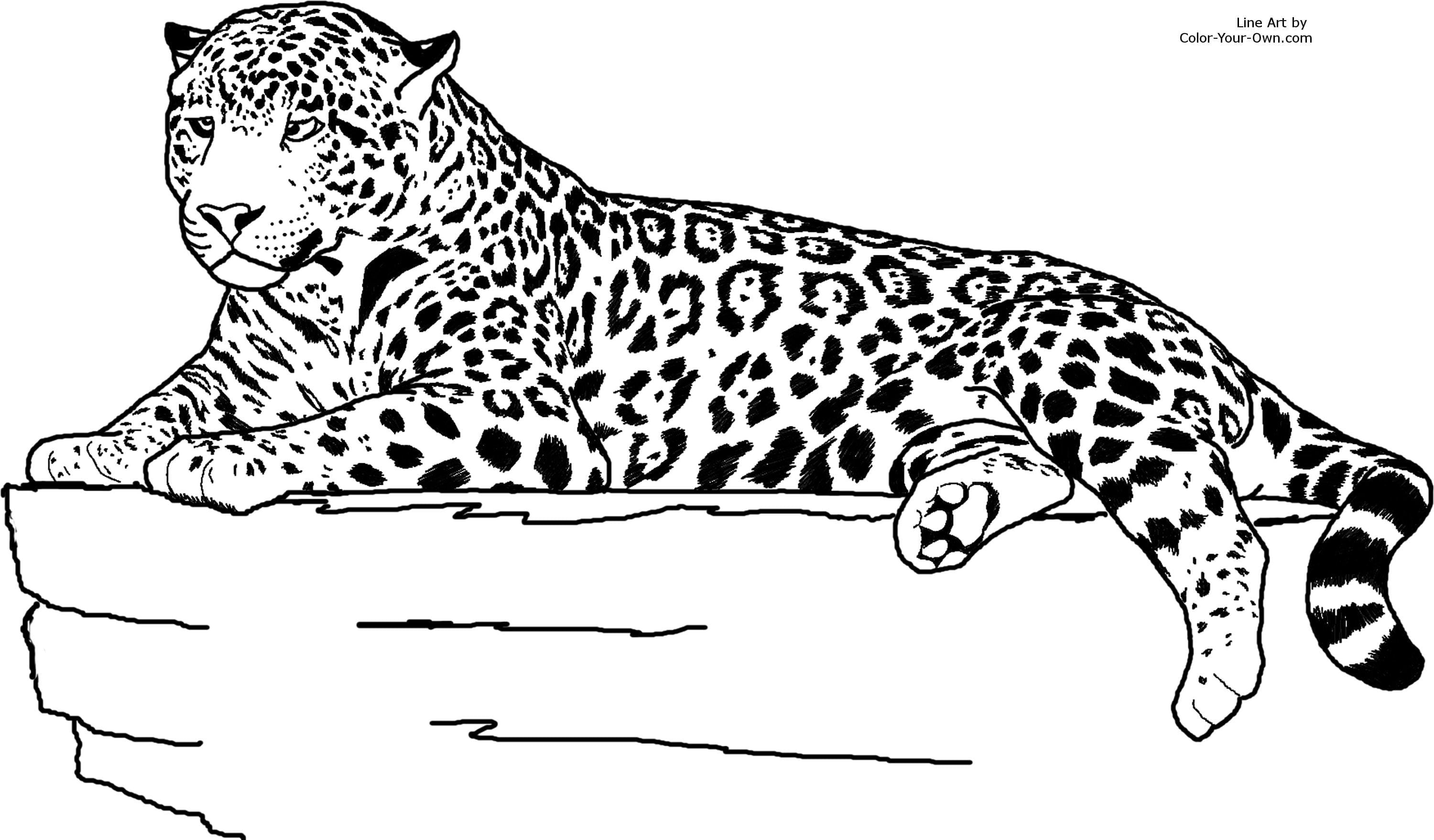 Realistic Animal Jaguar Coloring Pages Neo Coloring For Qqa Me And
