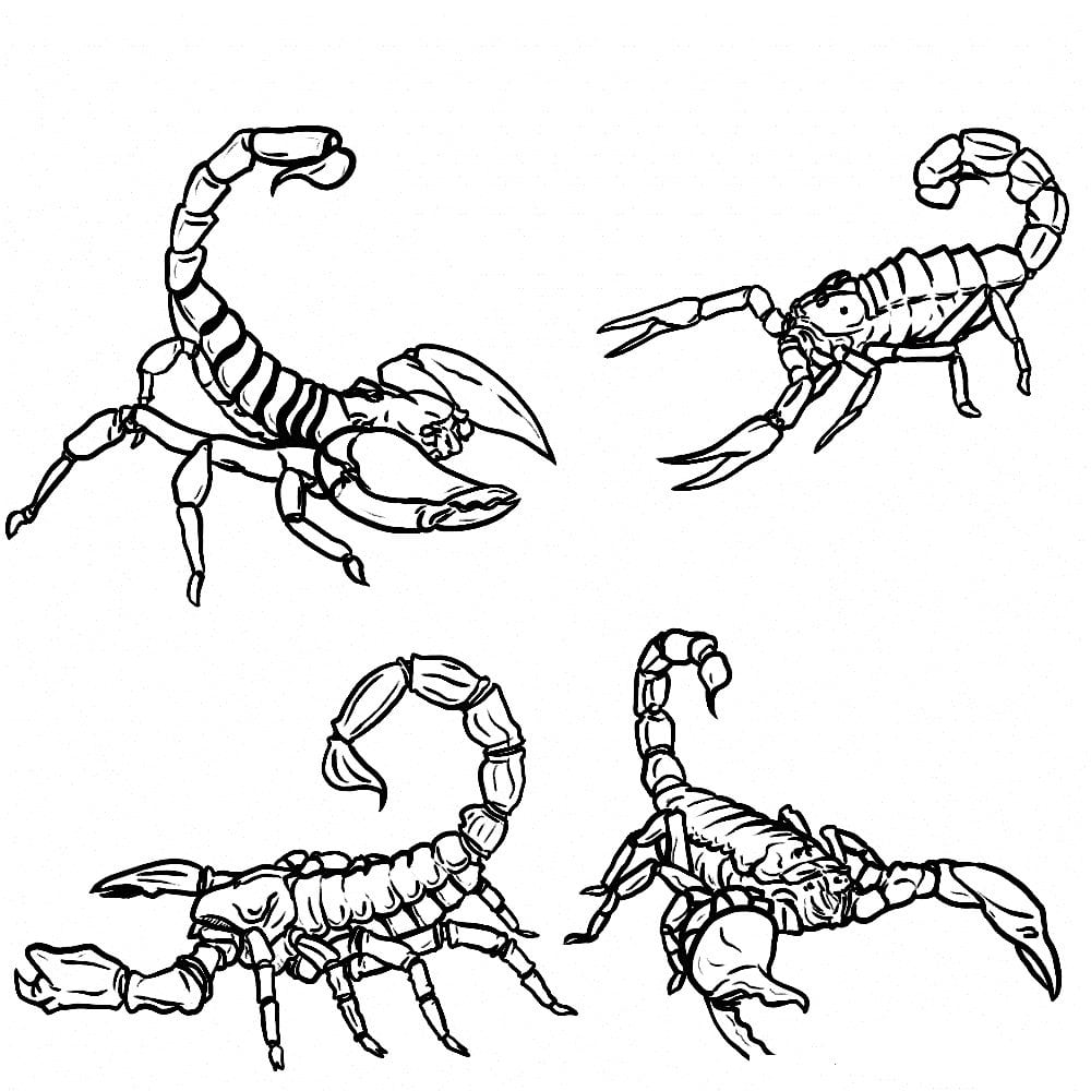 Printable Scorpion Coloring Pages For Kids