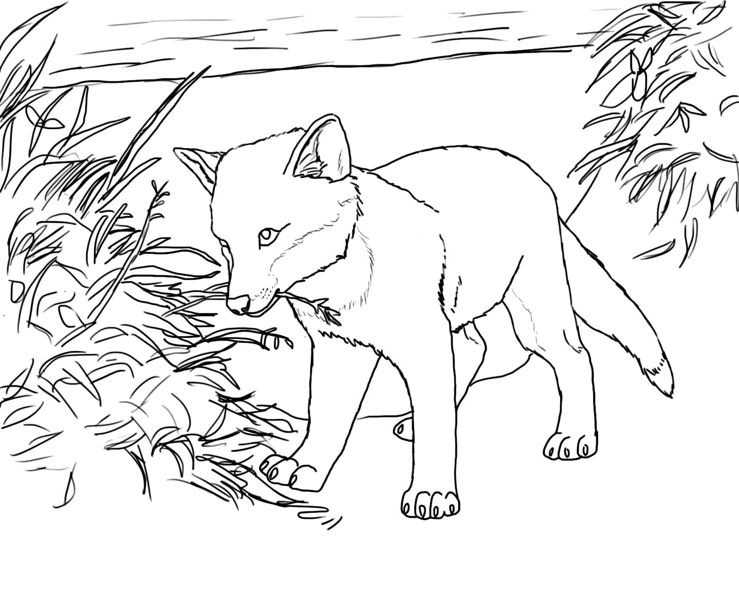 Simplistic Baby Fox Coloring Pages Free Printable For Kids On Page