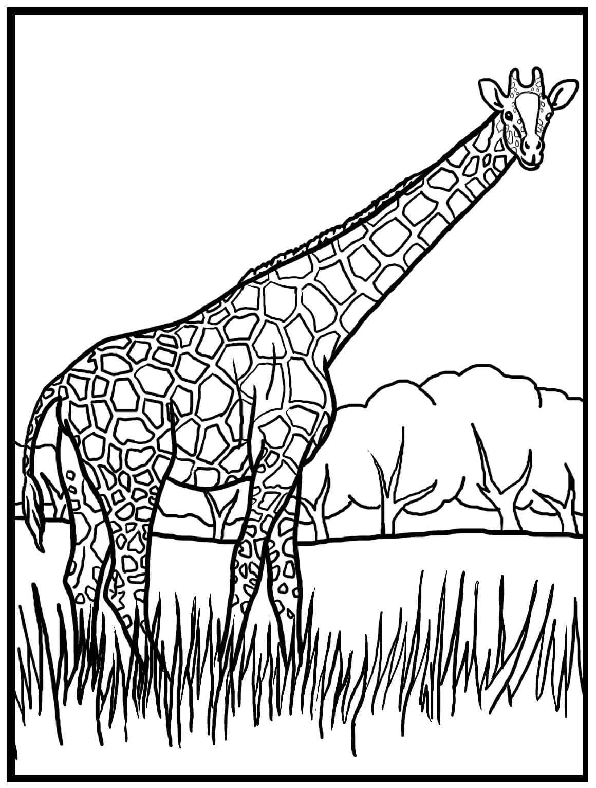 Stunning Giraffe Color Page With Giraffe Coloring Pages On With Hd