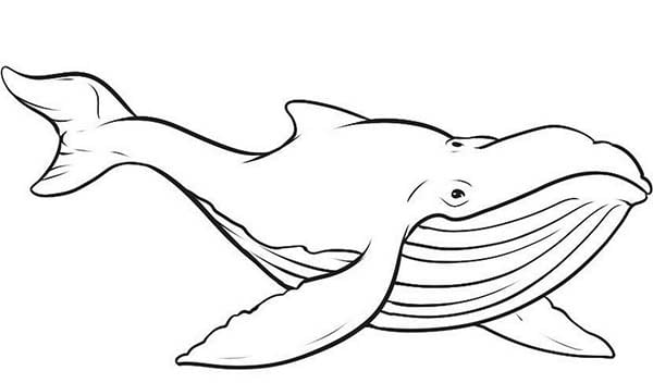 Stunning Whale Coloring Pages Colouring For Tiny Picture Of Blue
