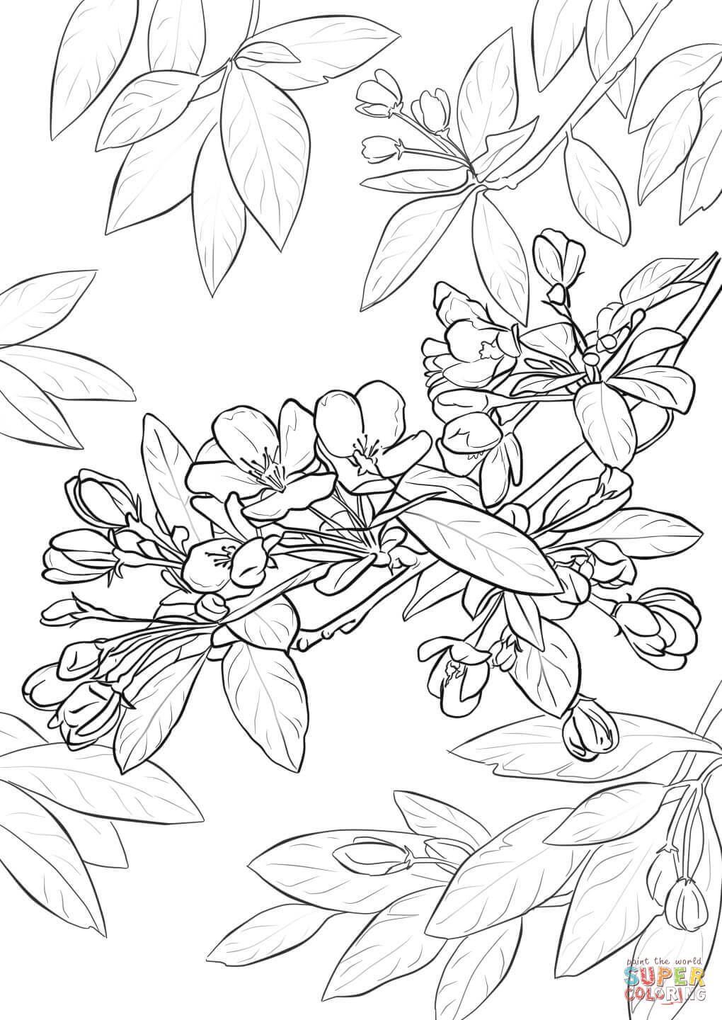 Terrific Japanese Cherry Blossom Coloring Page  3816