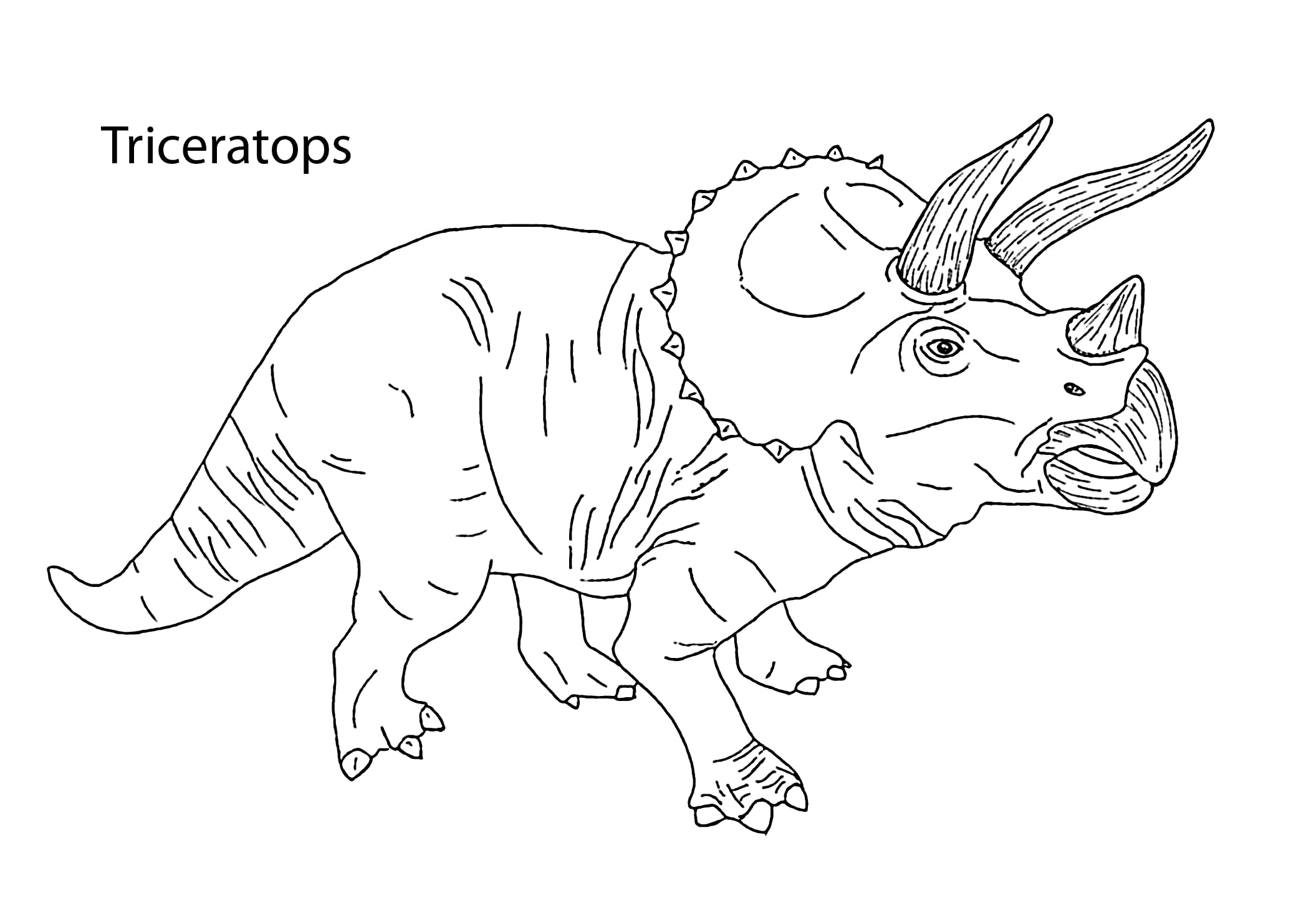 Triceratops Coloring Page 2  14668