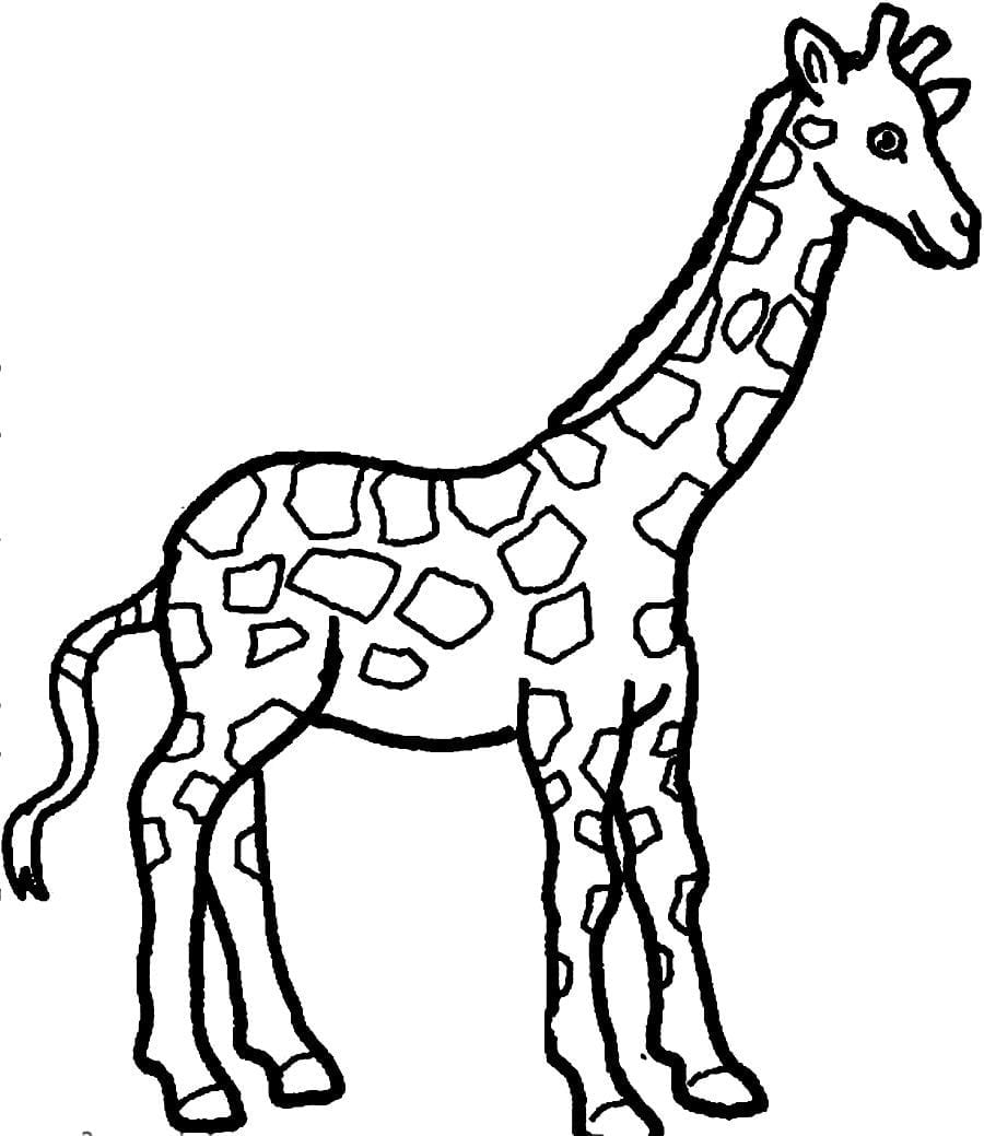 Interesting Gjqtgx At Giraffe Coloring Page On With Hd Resolution